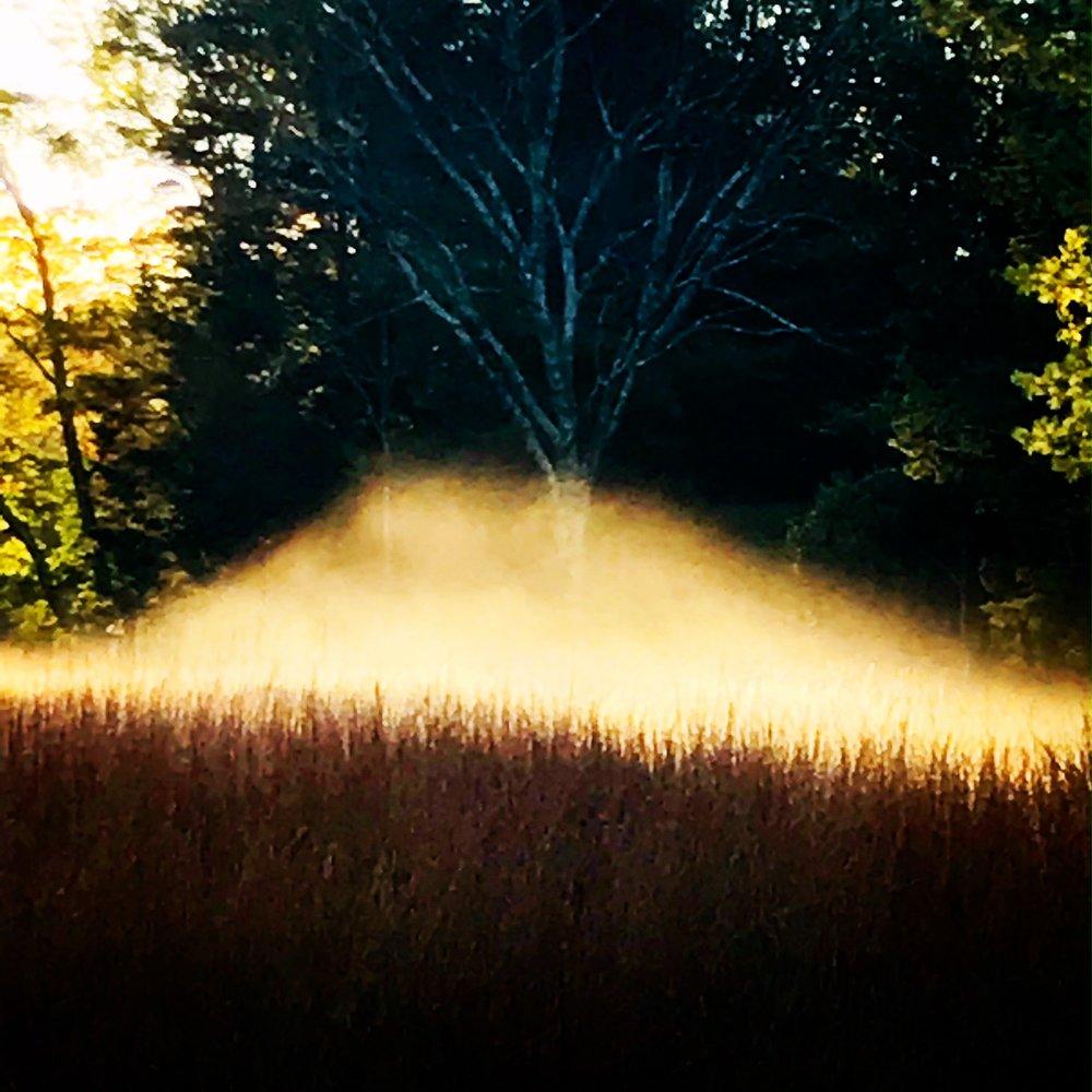 meadow mist.JPG