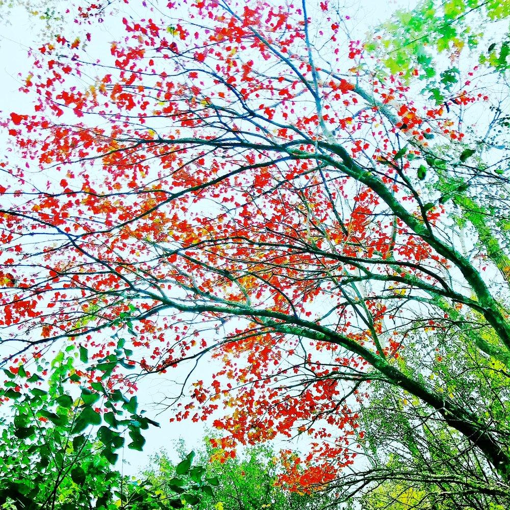 foliage 2.JPG