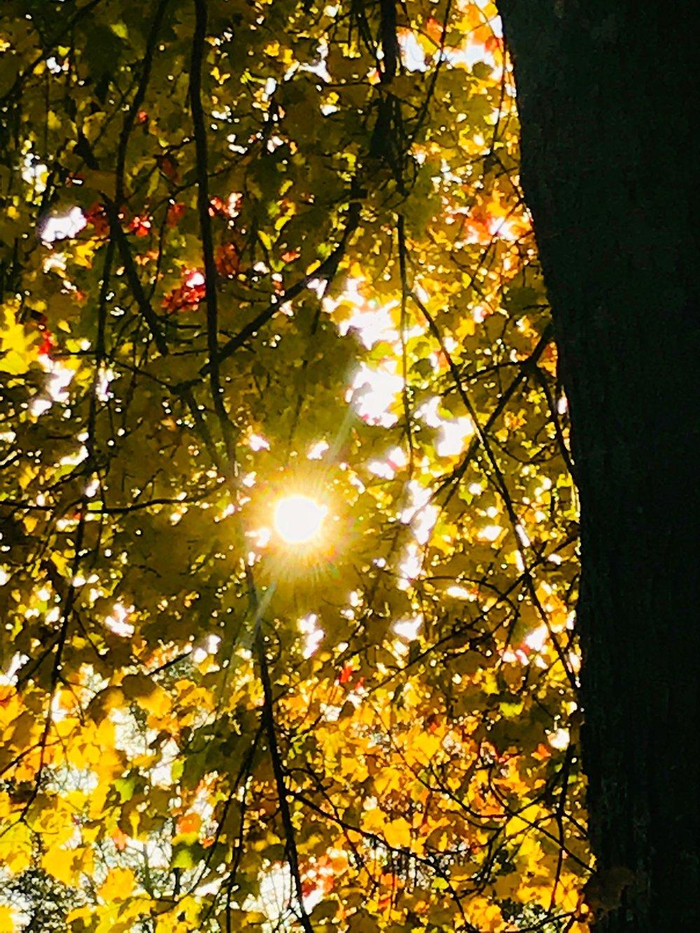sun leaves.jpg