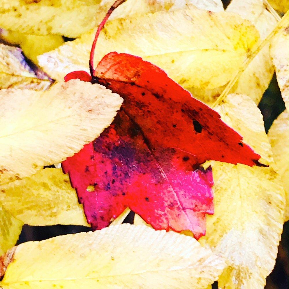 leaf fern.JPG