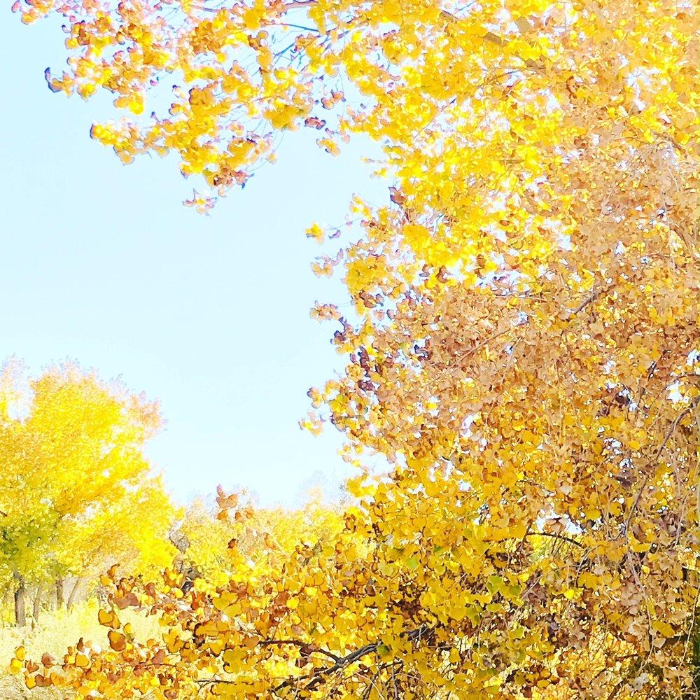 gold tree.JPG
