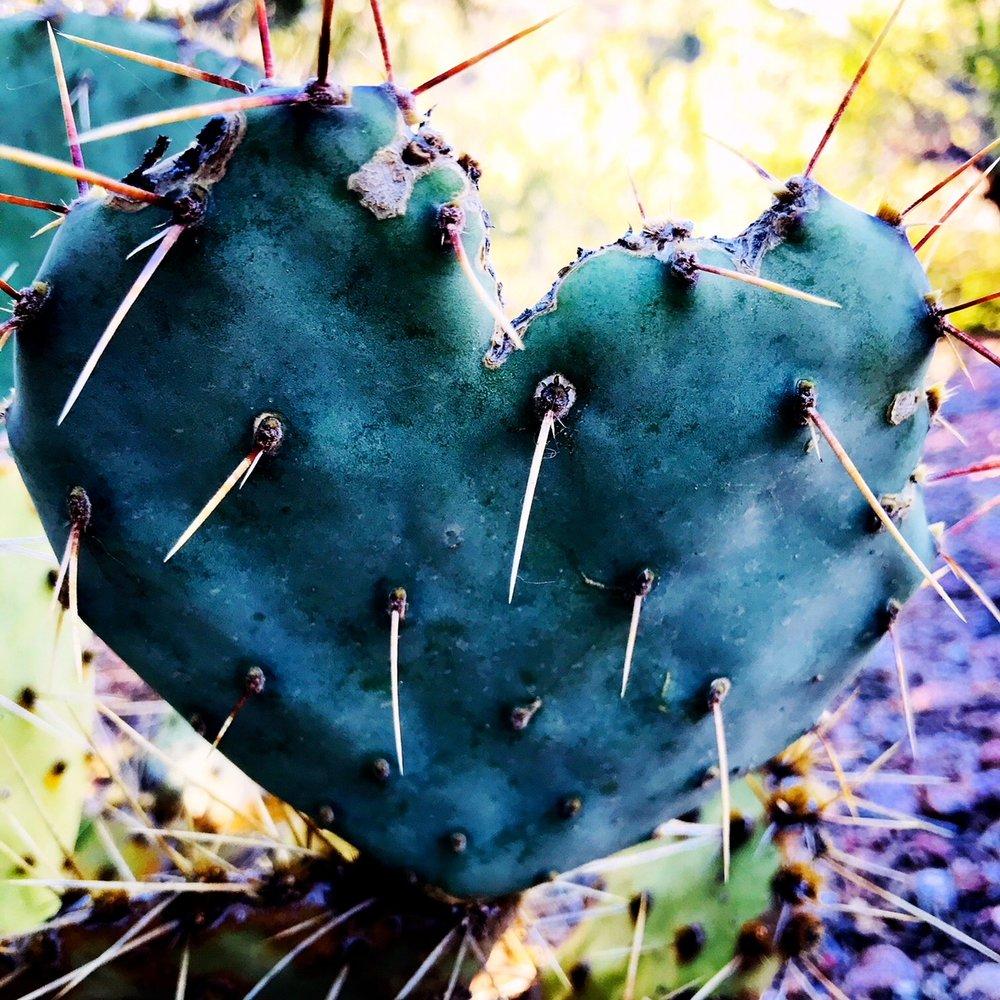 cactus heart.JPG