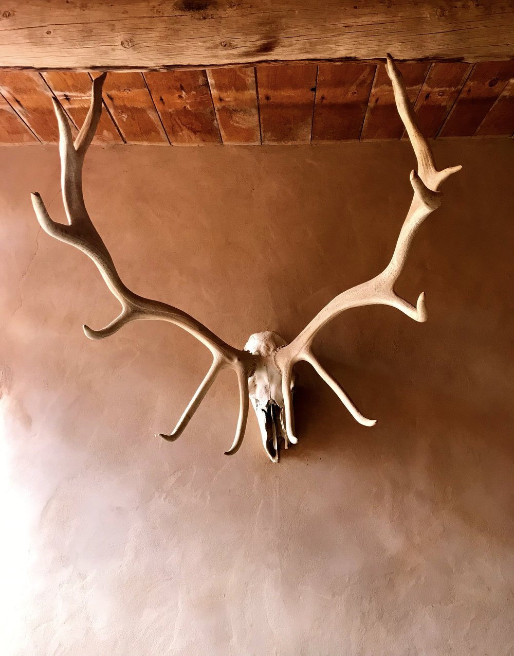 Copy of antlers