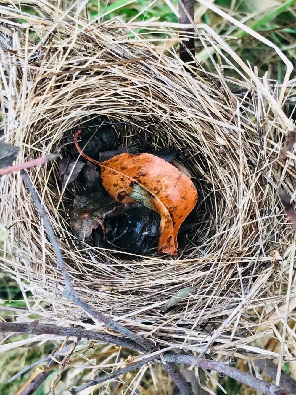 nest w leaf.jpg