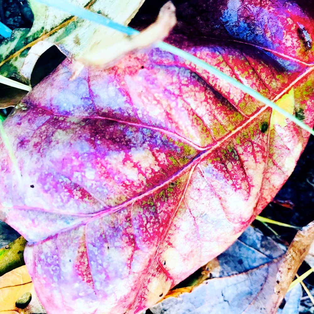 leaf red.JPG
