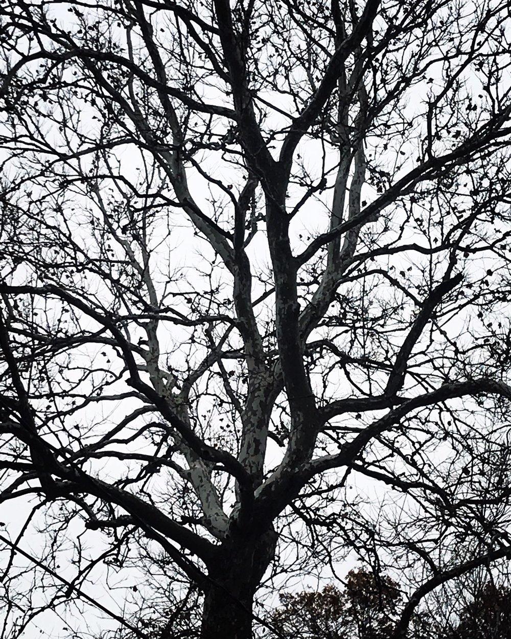 Morning Tree, December