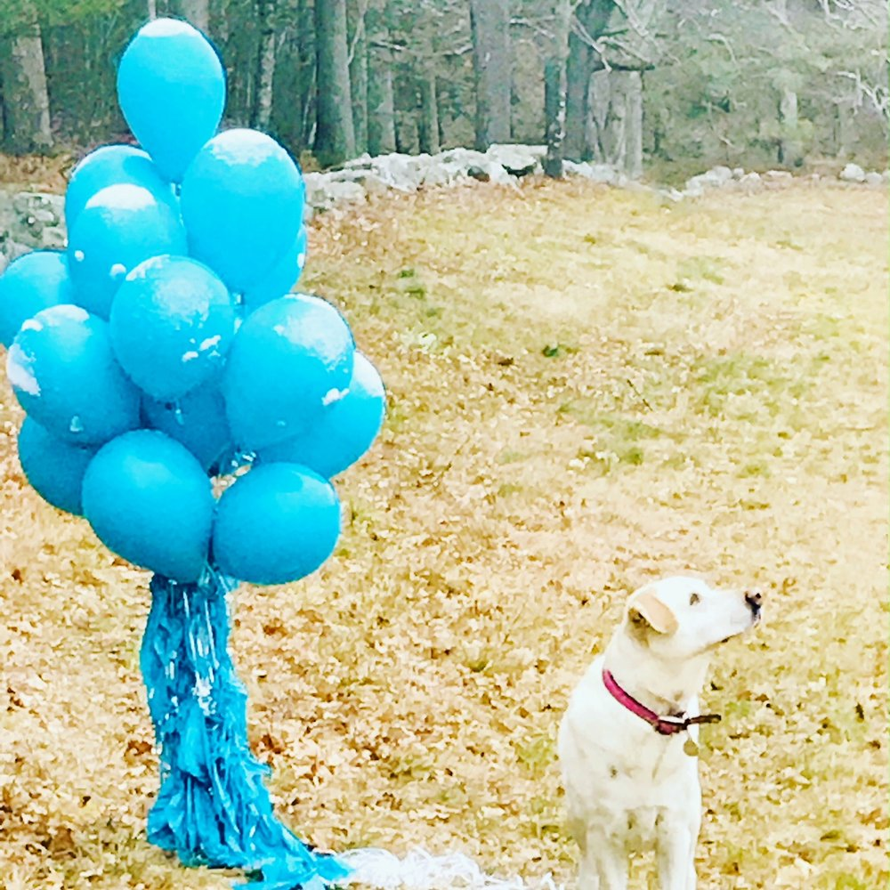 Suzi wonders who sent the balloons