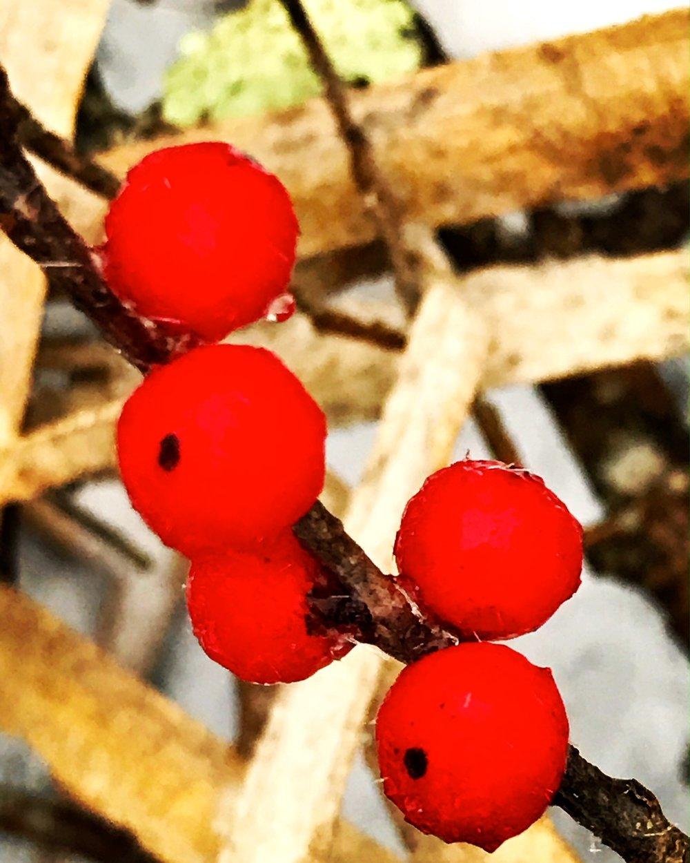 Berries in the swamp
