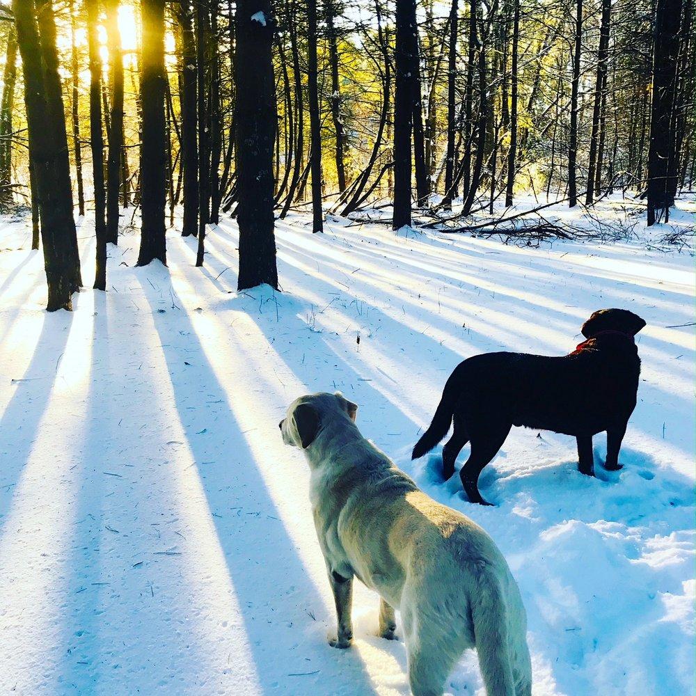 dogs trees.JPG