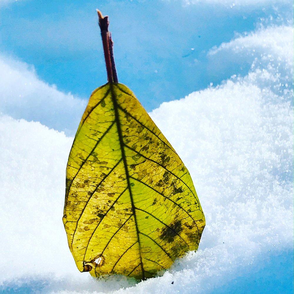 leaf 3.JPG