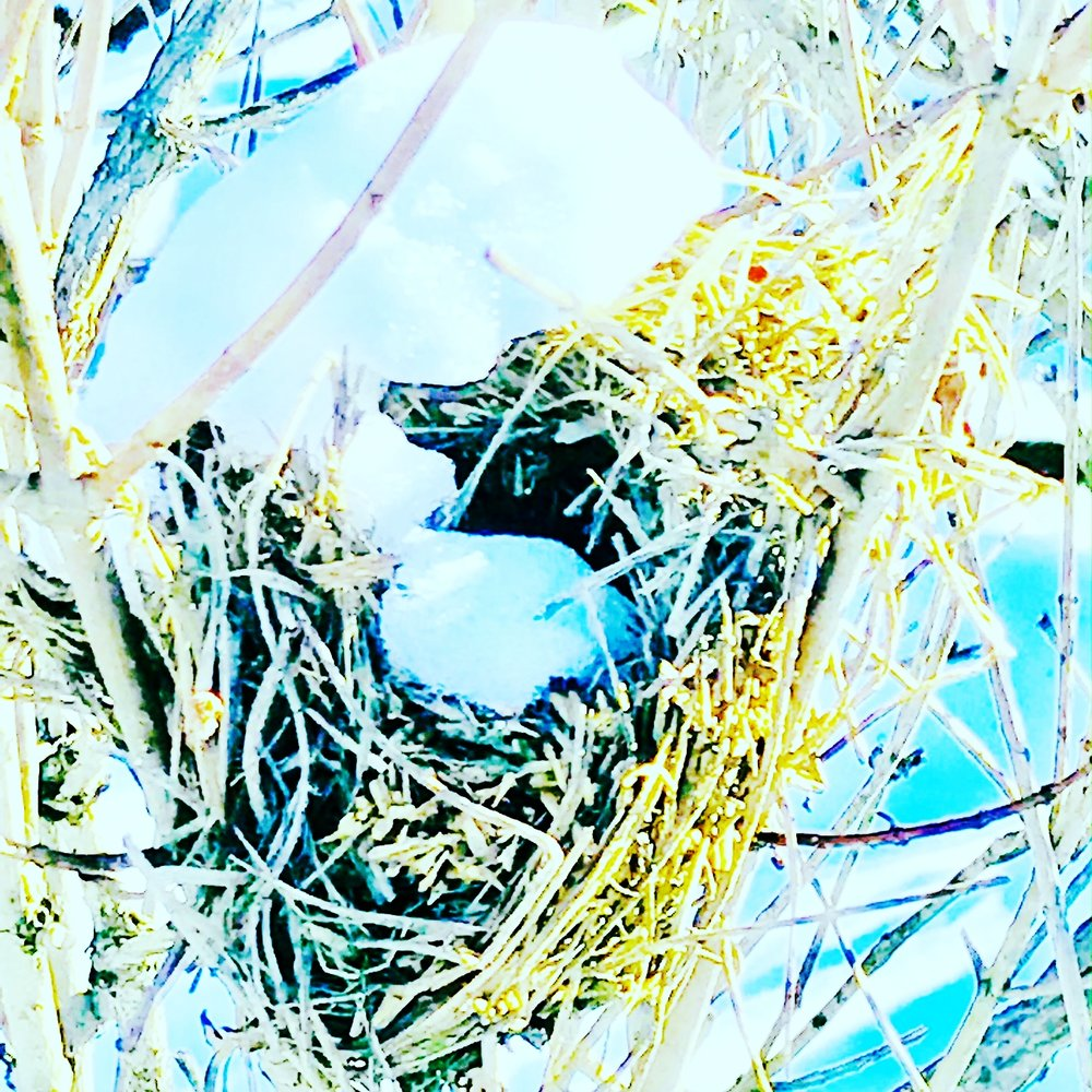 Snow Egg in Winter Nest, Charles River