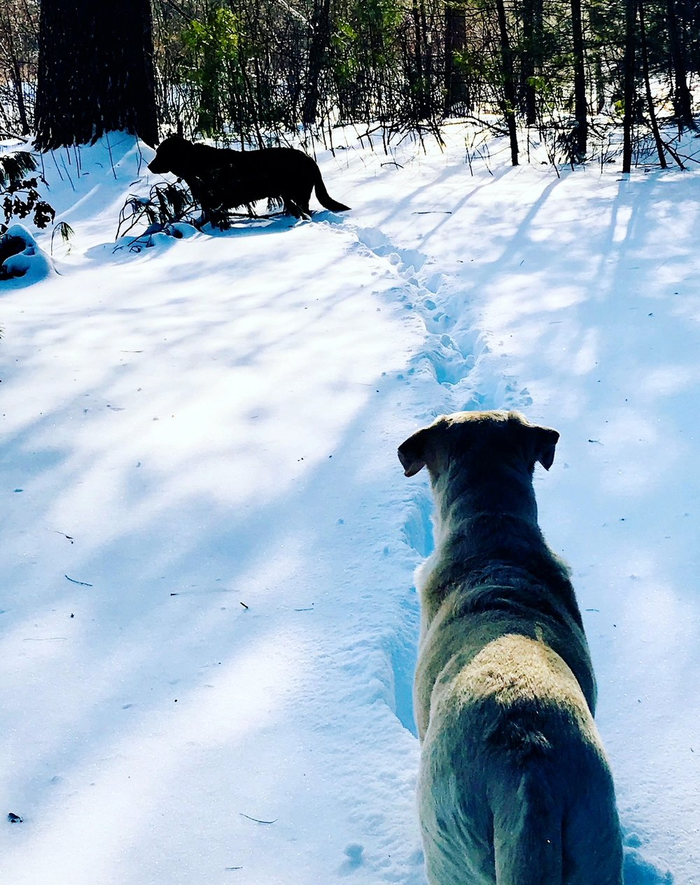 charlie suzi snow.JPG