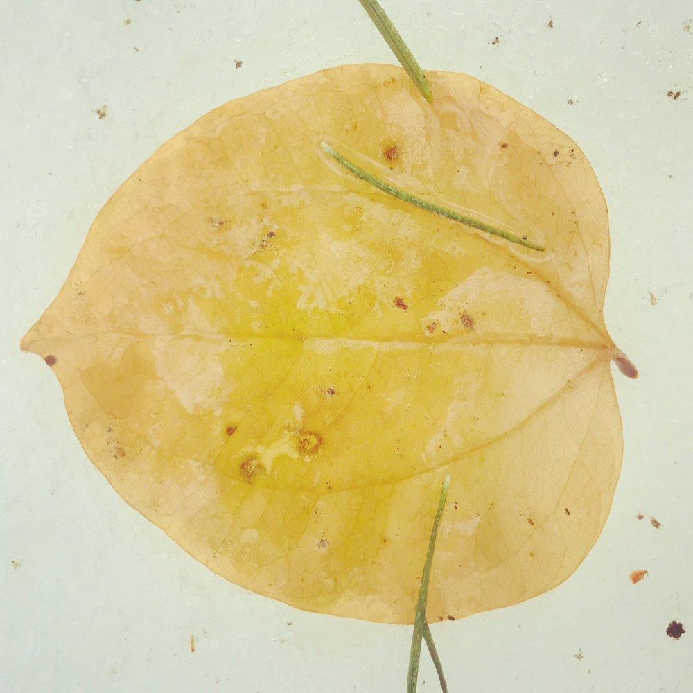 pretty leaf.JPG