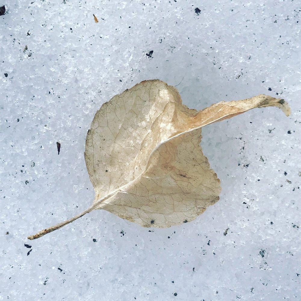 leaf shell.JPG