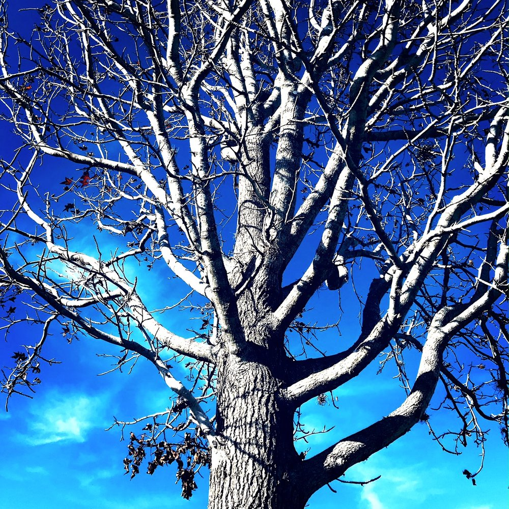 Tree Tampa.JPG