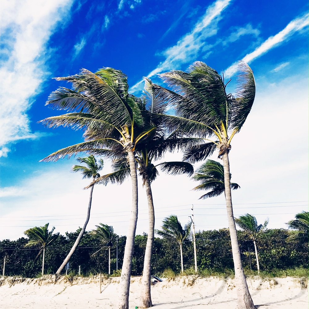 windy palms.JPG