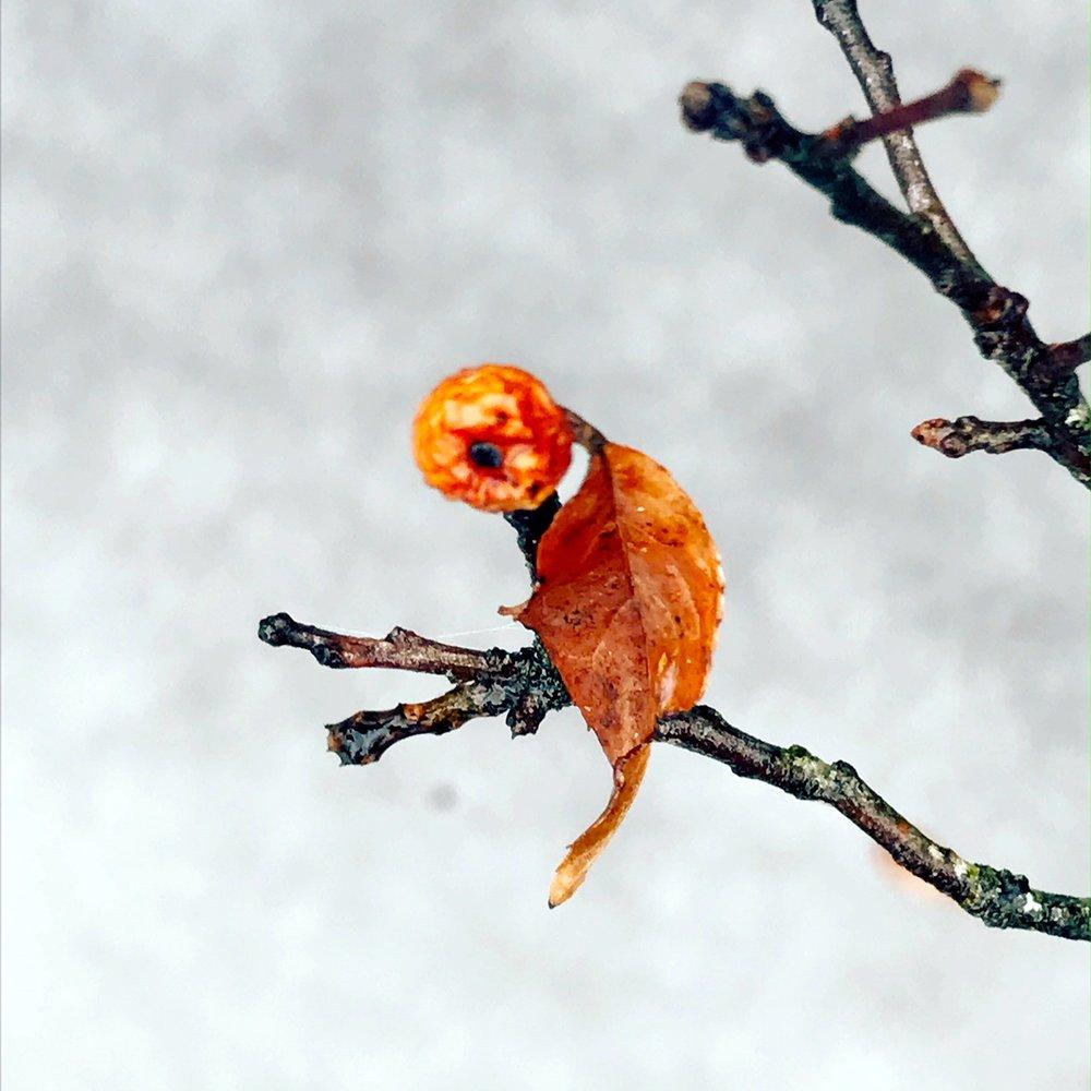 bird berry.JPG