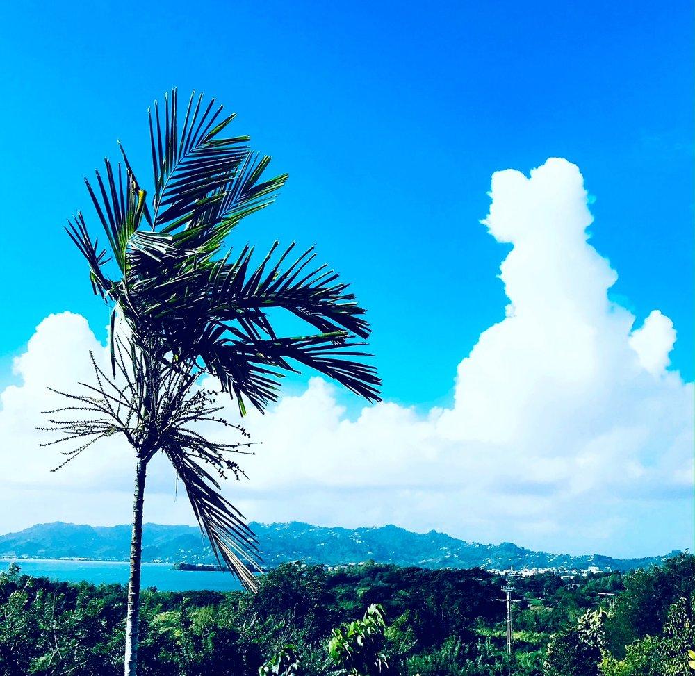 palm cloud.JPG