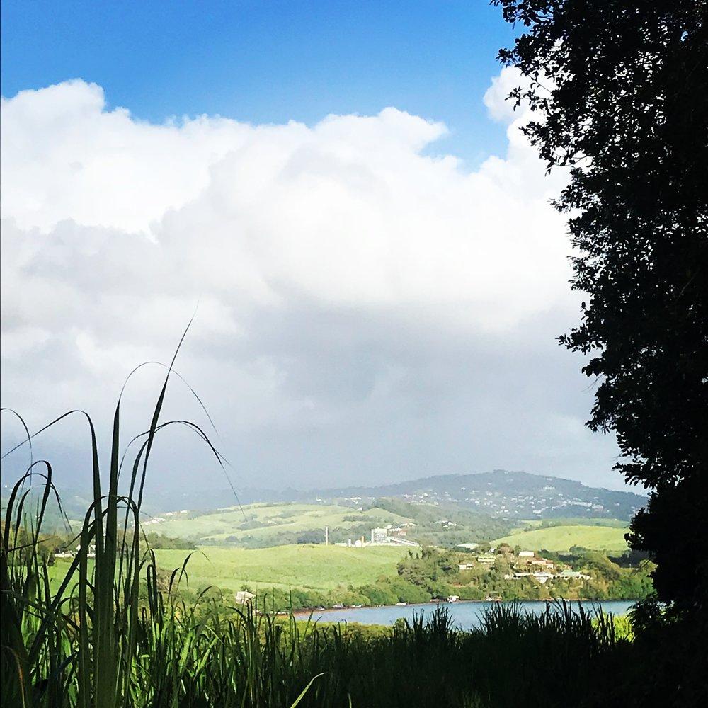 cloud and cane.JPG