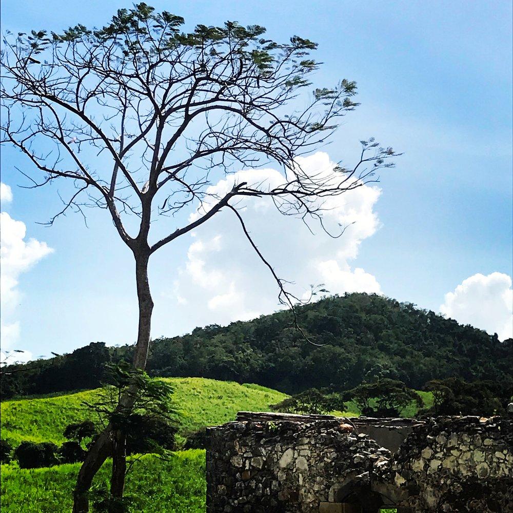 tree and stone.JPG