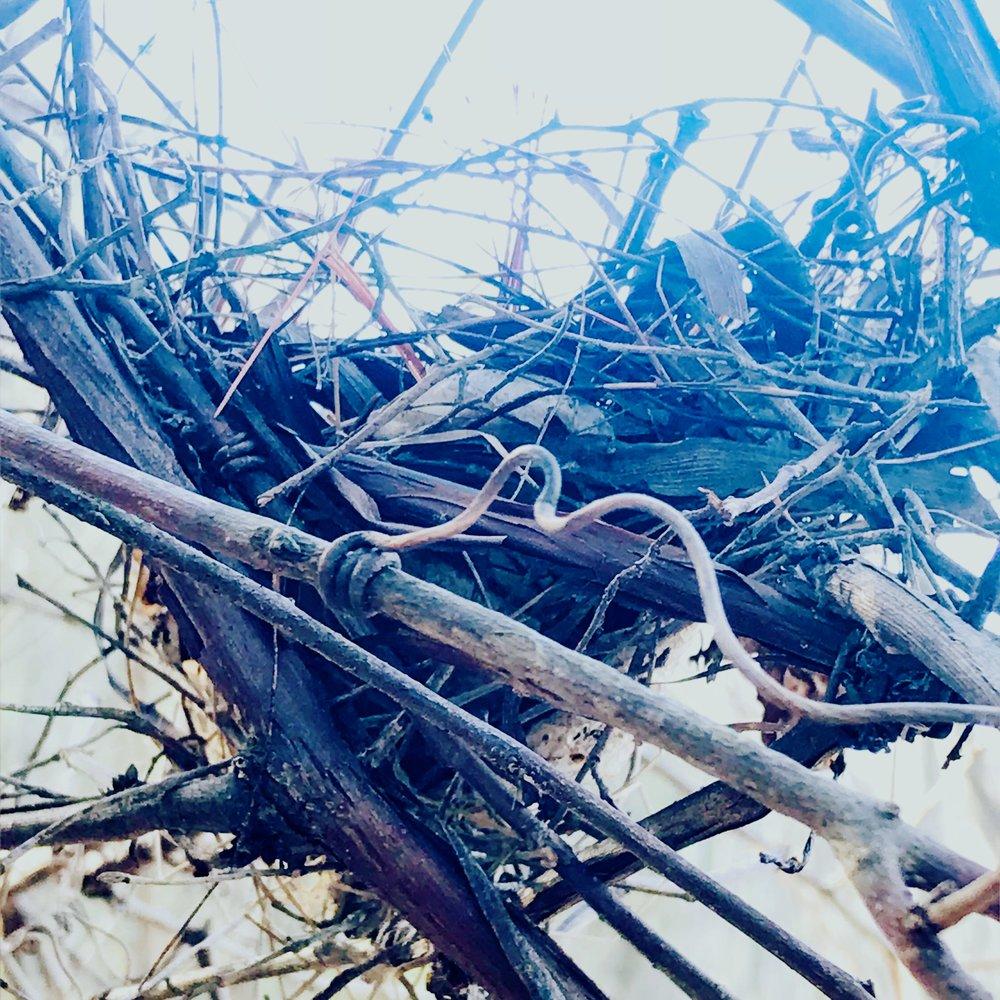 Nest, vine, tether