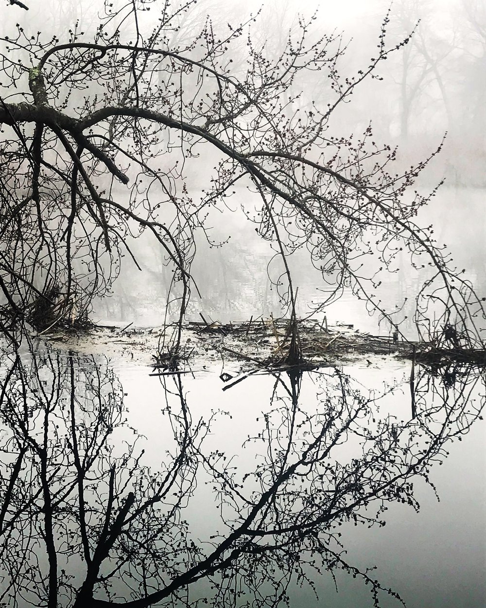 Black River Fog on Charles April 2018.JPG