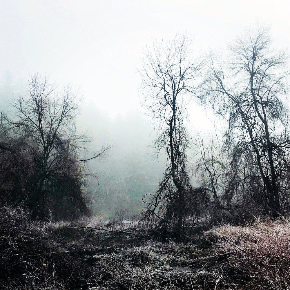 brook in fog black trees.JPG