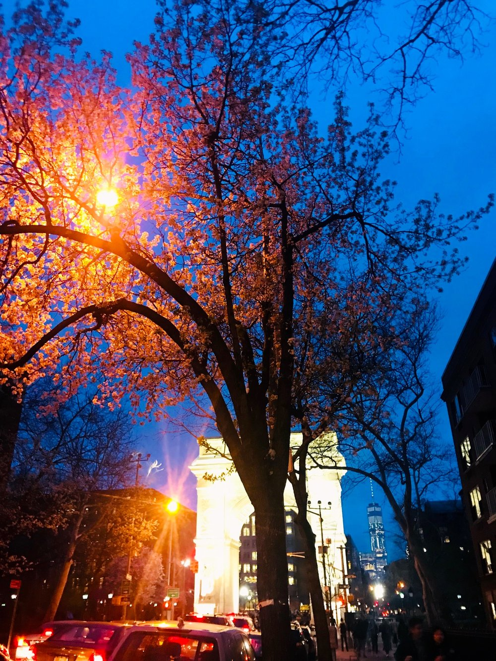 Evening, Washington Square Park, NYC