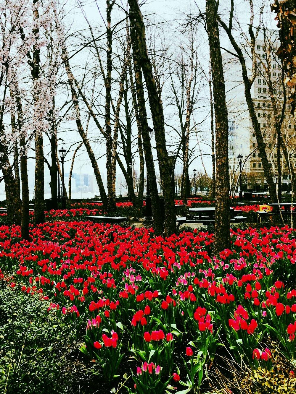 tulips riverwood terrace.jpg