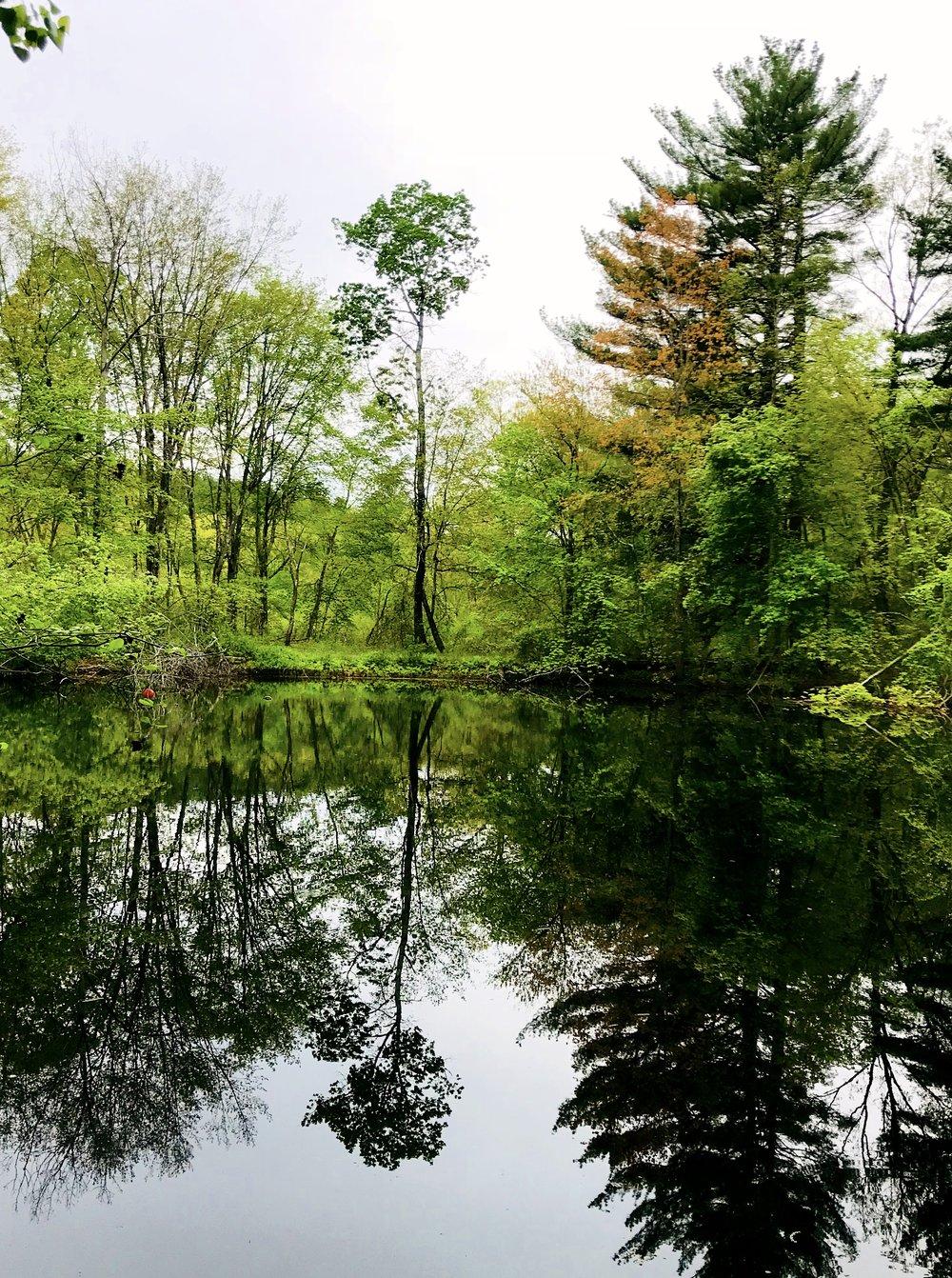 Weir Hill Trail, Sudbury, MA