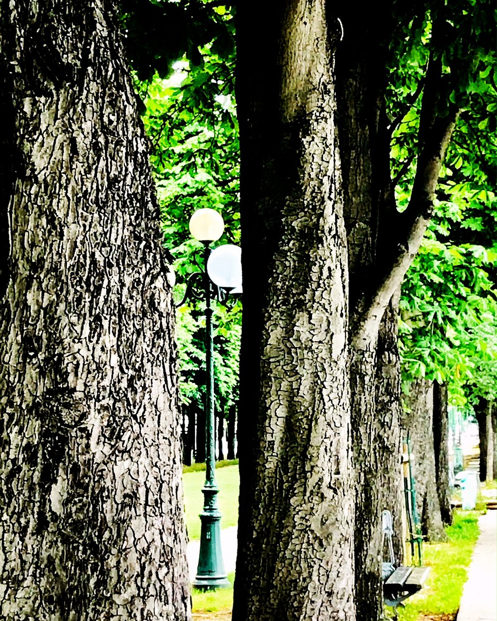 lamps and trees paris.JPG