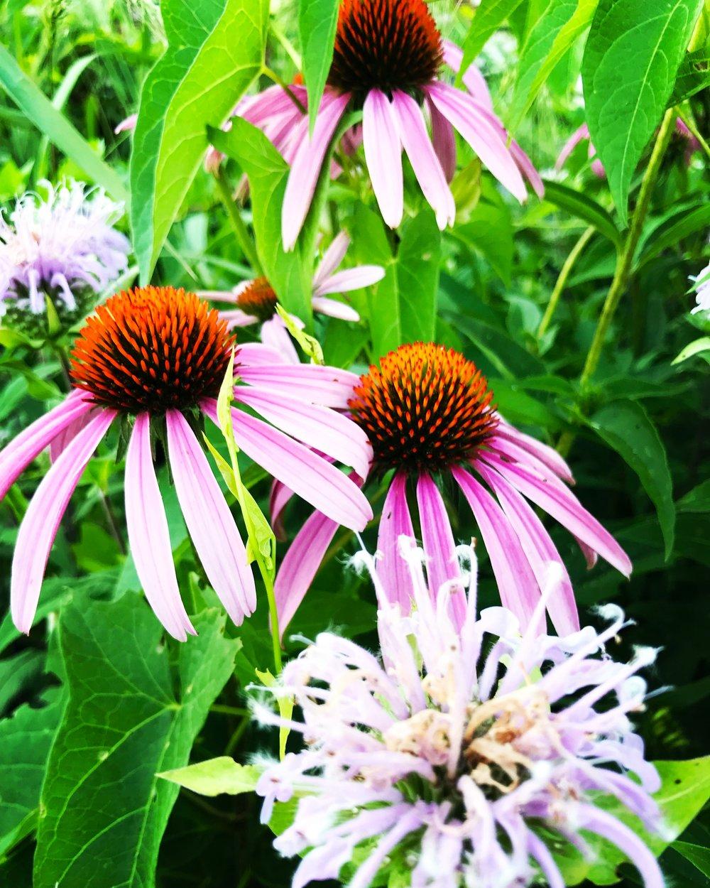 Muhlenberg Rain Garden