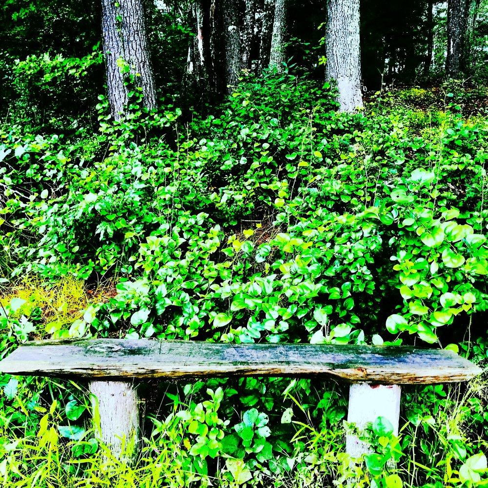Zen Bench in Trees, Charles River