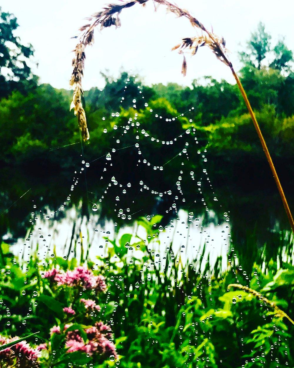 Charles River Morning Web