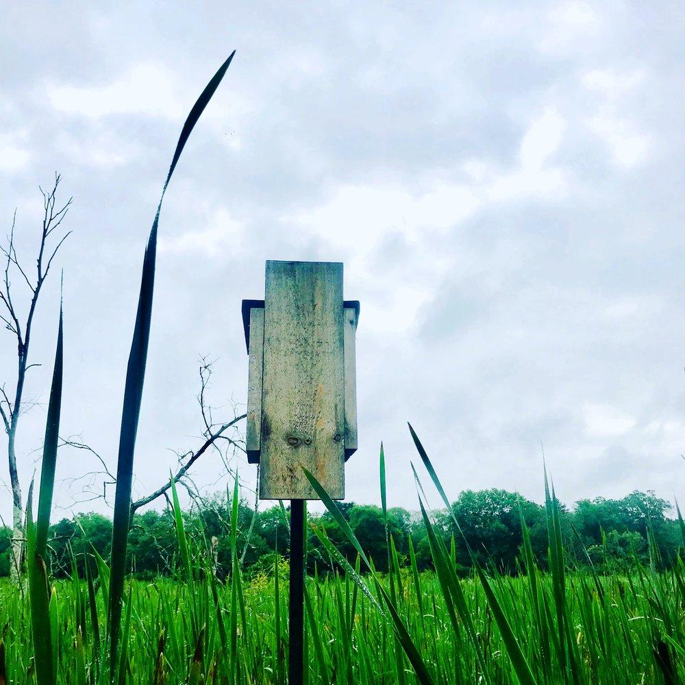 Bird Feeder, Charles River Wetlands