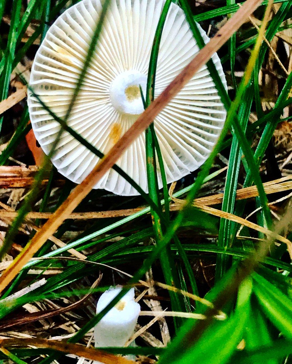 mushroom top.JPG