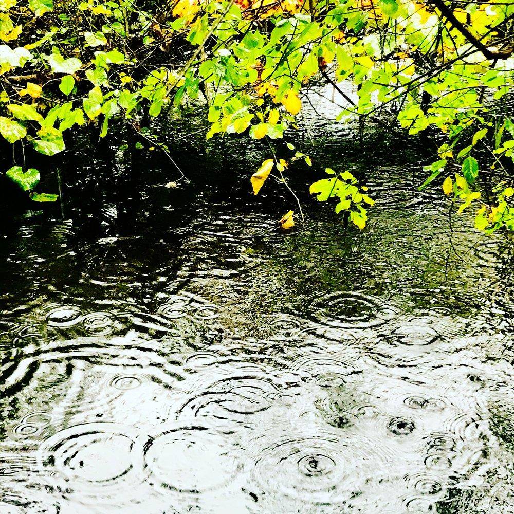 Rainy Brook, Rocky Narrows