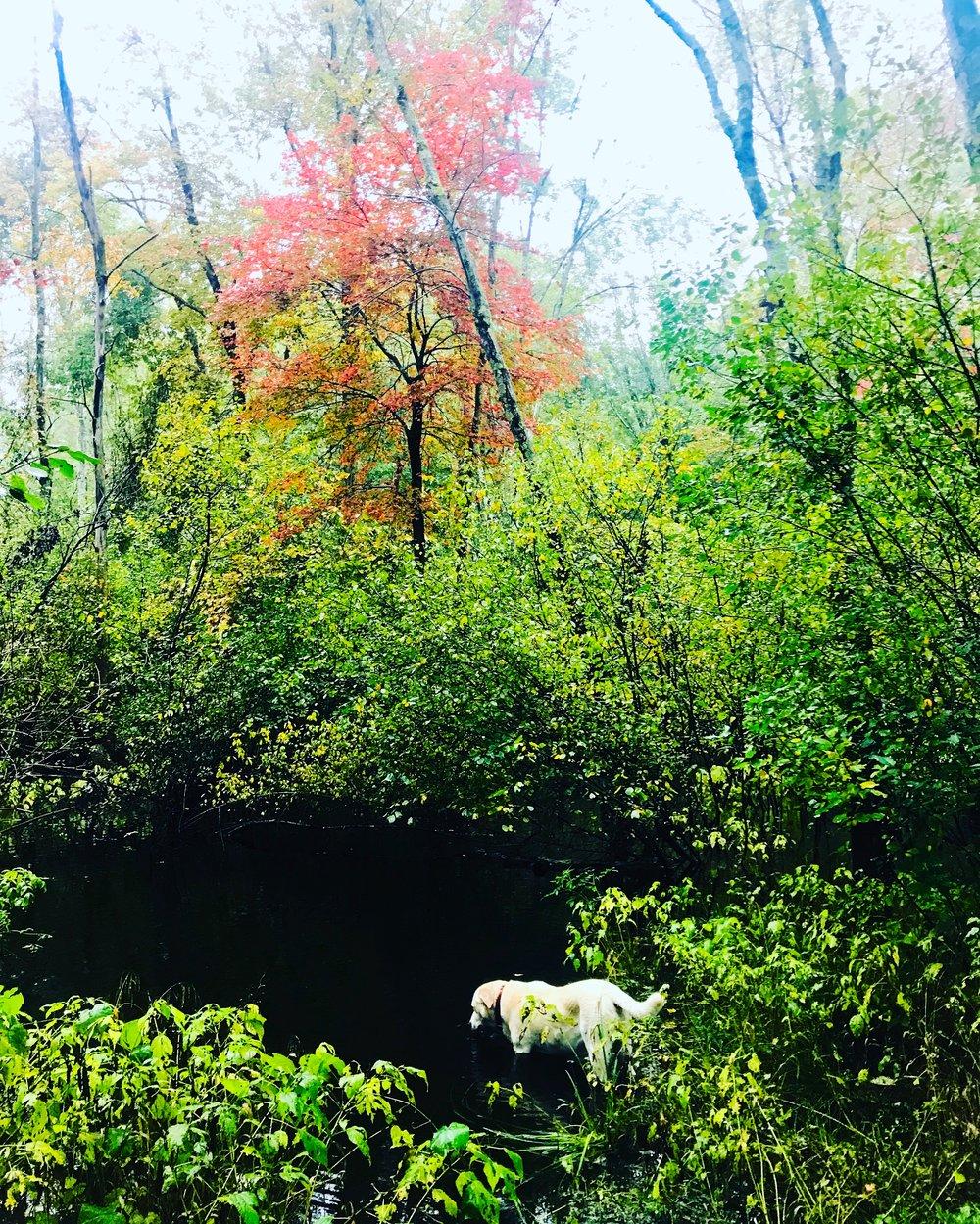 Suzi in the brook