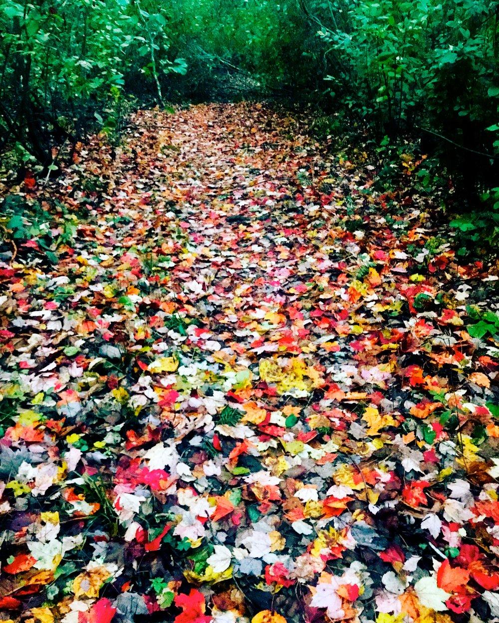 Path in Autumn Evening