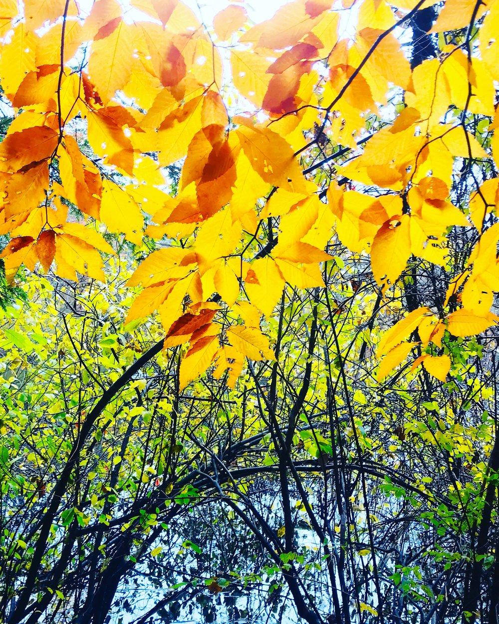 golden river branches river.JPG