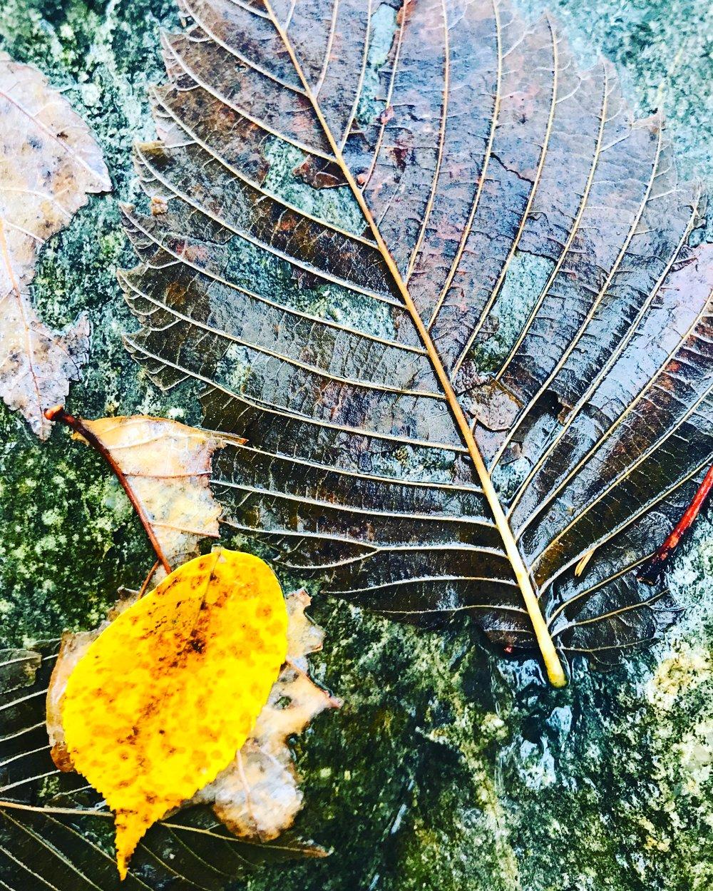 wet autumn leaves.JPG