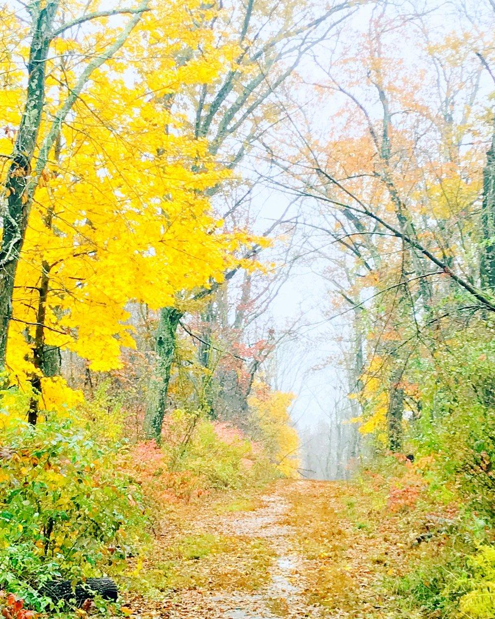 november golden path.JPG