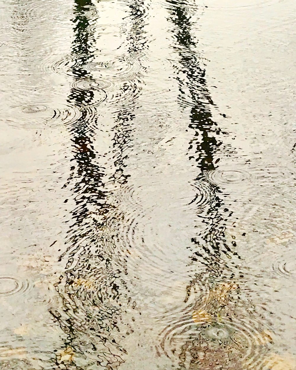 Charles River Rain