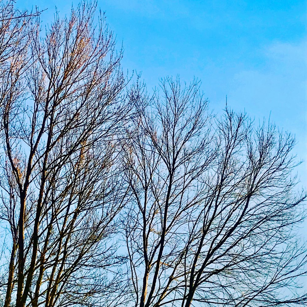 Early morning flash of blue sky behind leafless trees
