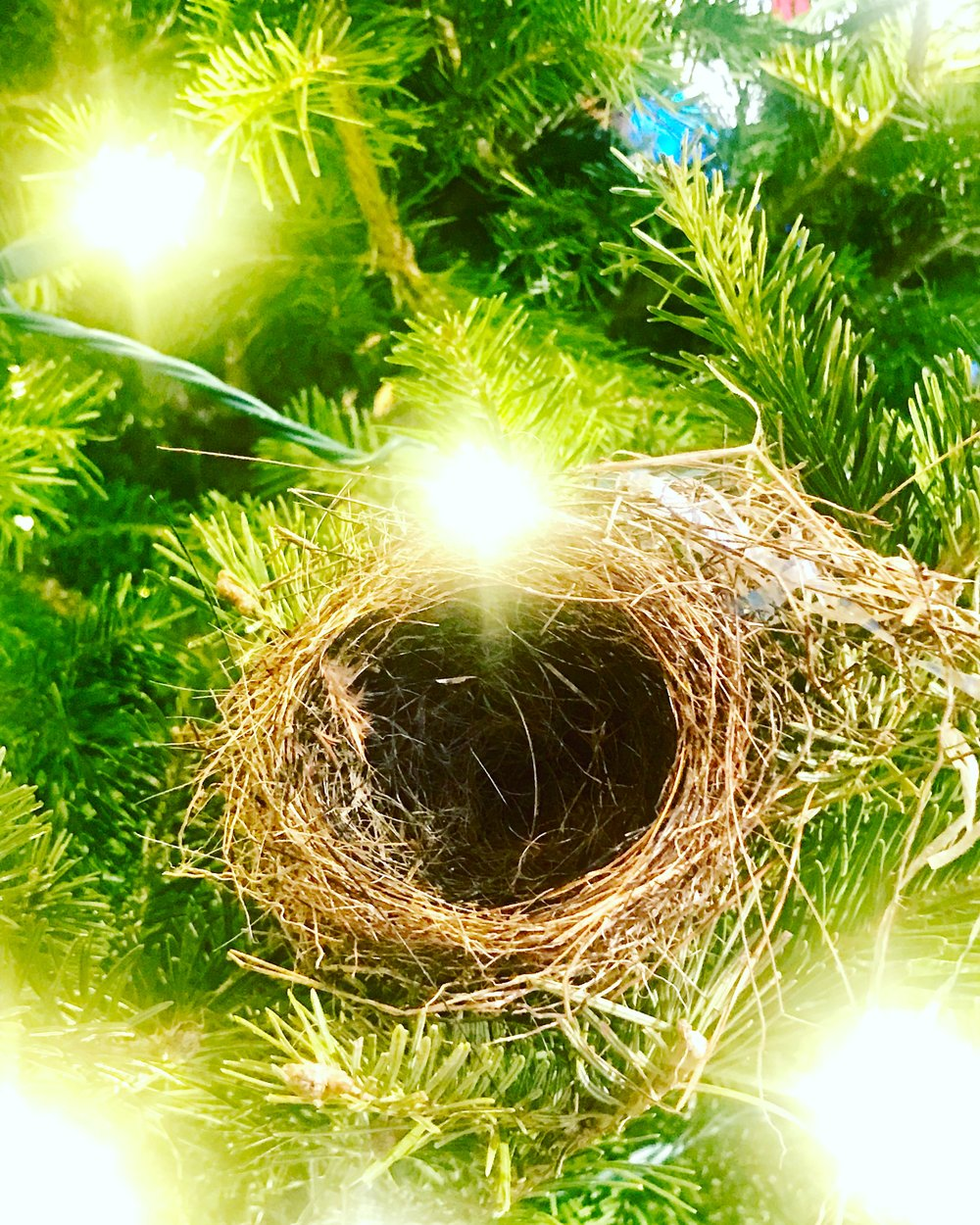 This morning's found nest, first ornament on Christmas tree