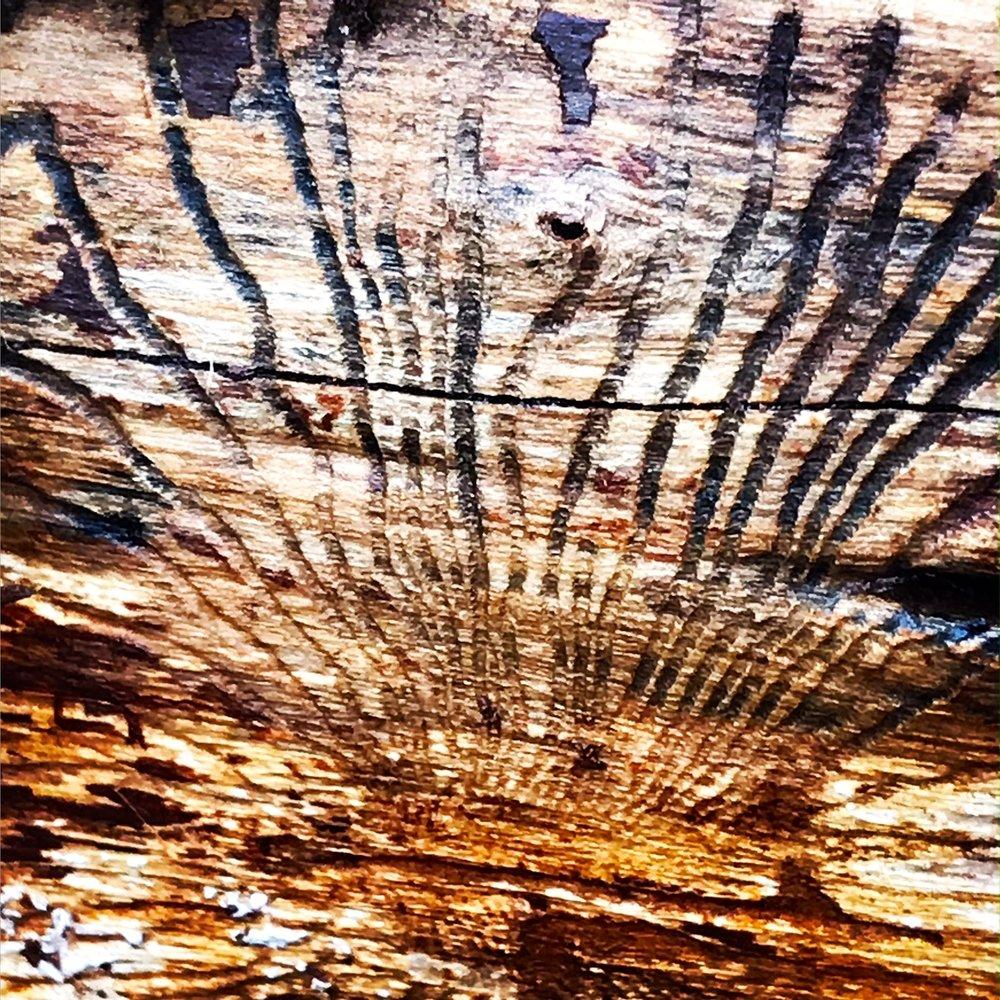 Tree bark, winter woods