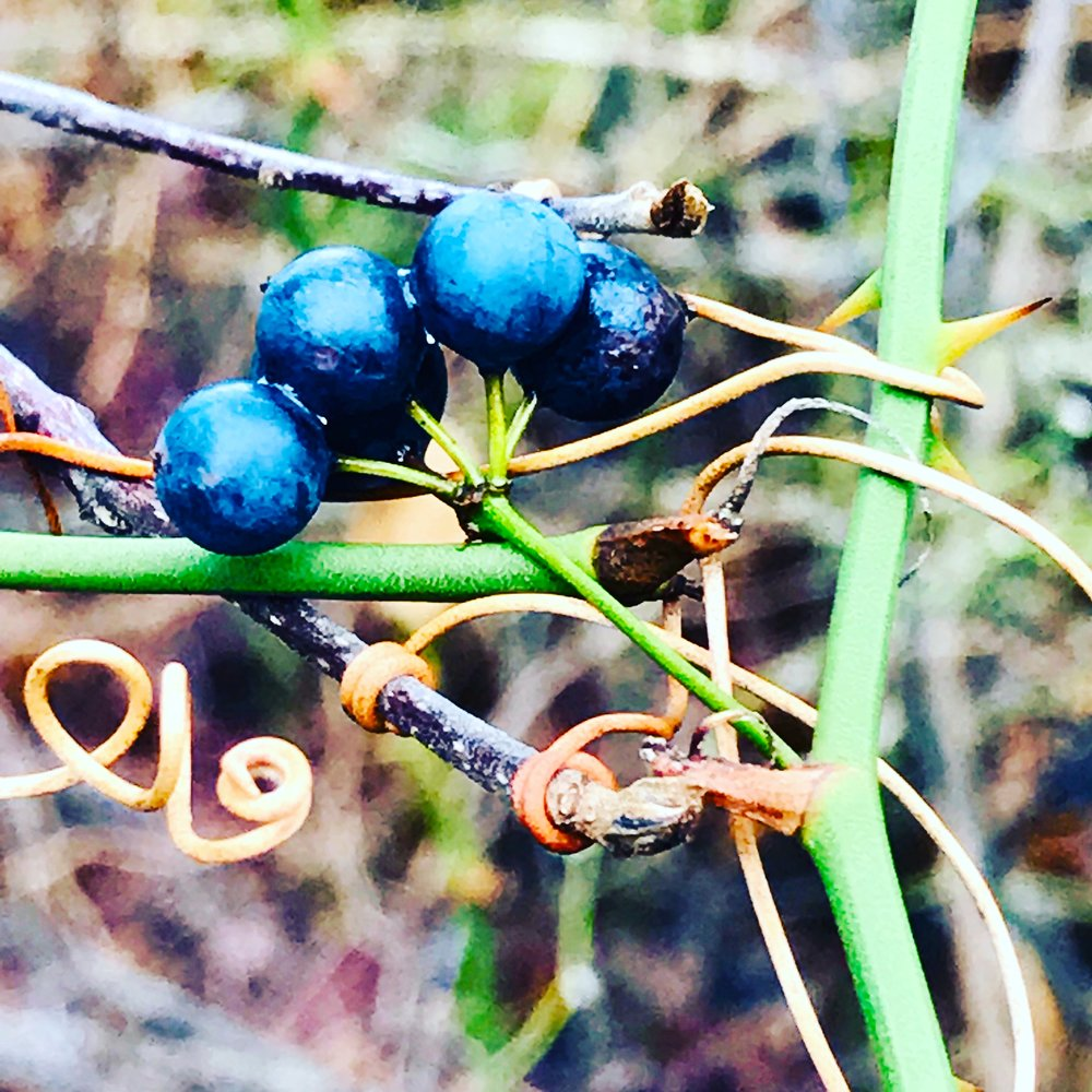 Berries, Winter Woods