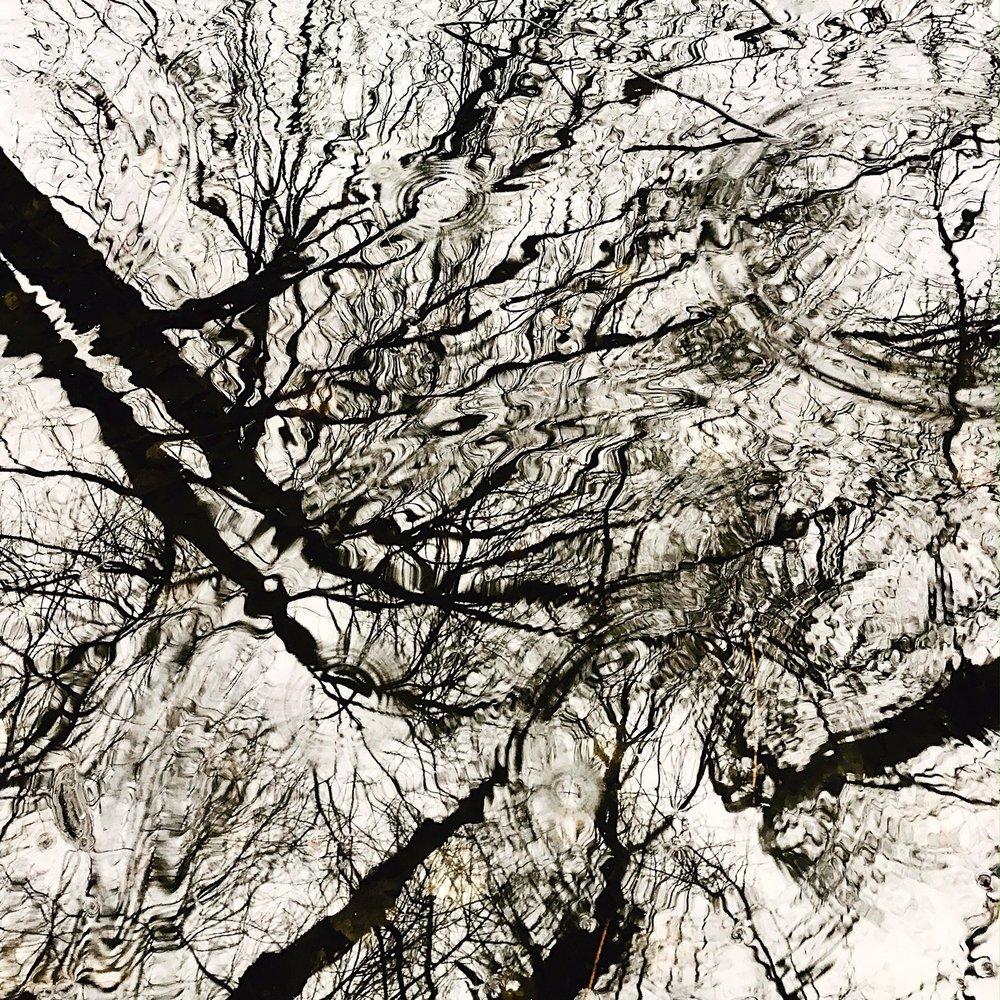 raintree.JPG