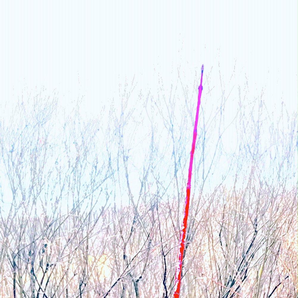 willowstick.JPG