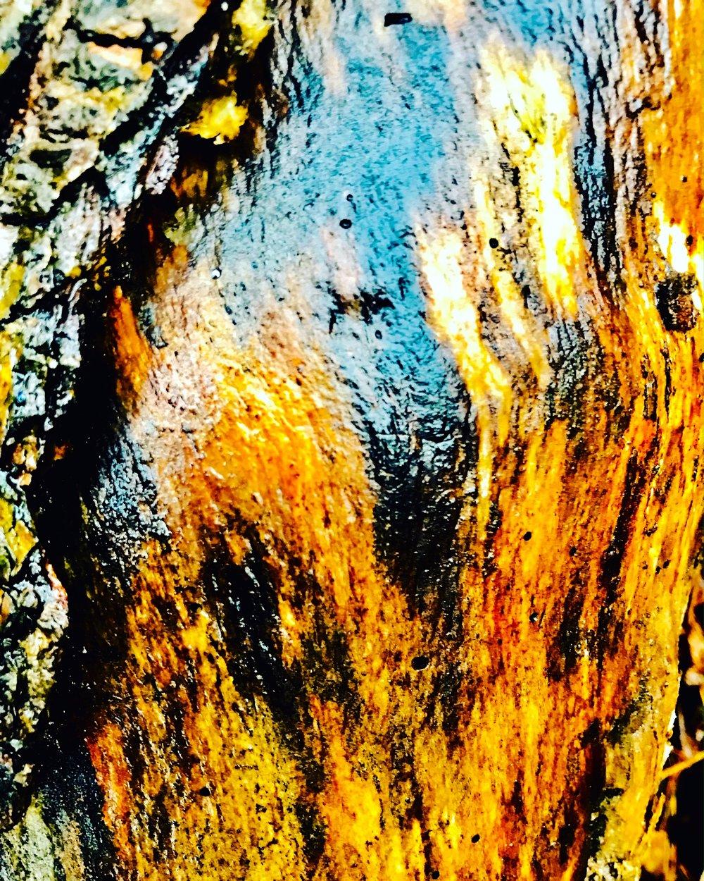 wetwood.JPG